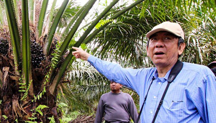 Alumnus Fakultas Kehutanan UGM, Teguh Patriawan, menjelaskan tentang aktivitas perkebunan sawit dalam menghadapi pandemi. Foto: Ist